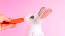 cute white bunny with carrot